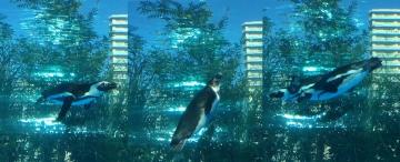 20171104-サンシャイン水族館 (2 3 4)