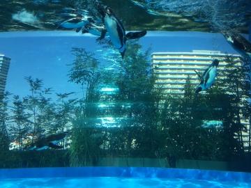 20171104-サンシャイン水族館 (20)