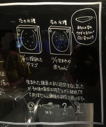 20171111-すみだ水族館 (39)-加工