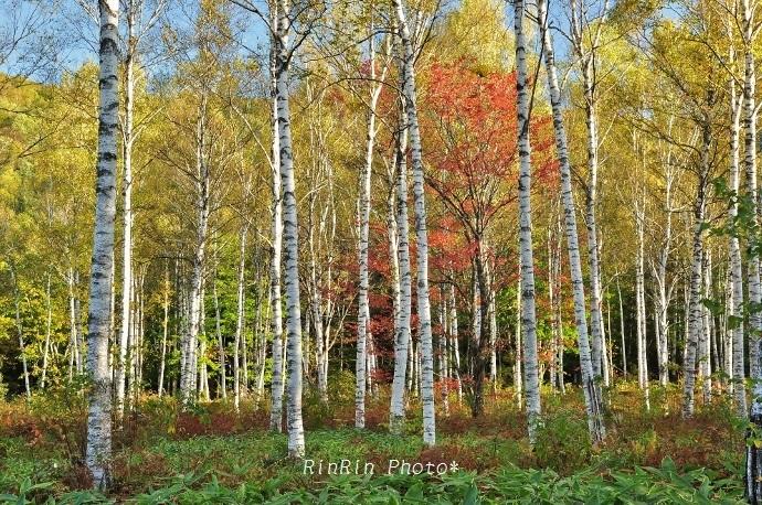 2013年10月日和田高原の秋