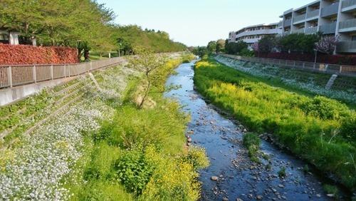 170425nogawa_in_spring