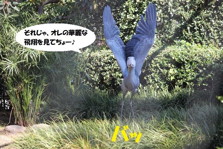 72 - コピー (2)