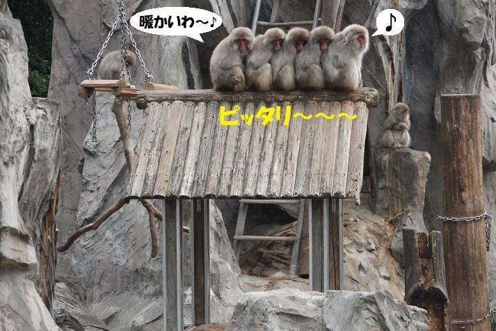 56 - コピー