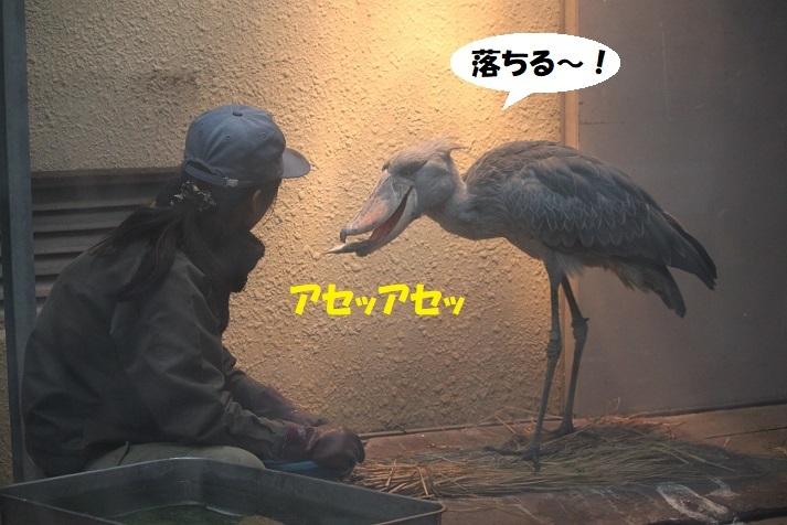 256 - コピー