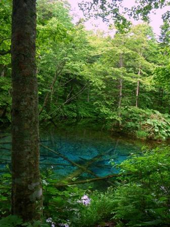 森の中のディープブルー