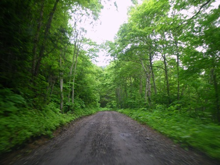 神の子池林道