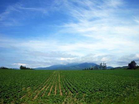 海別岳麓の畑