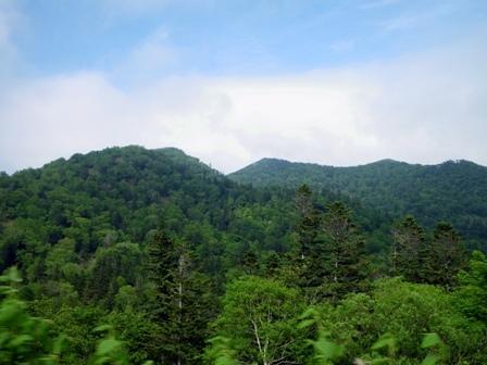 根北峠の森林