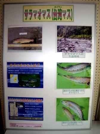 サーモンパーク展示(サラマオマス)