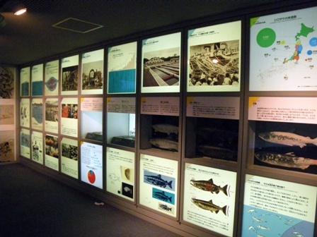 サケに関する展示