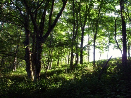 河畔林内の夕日