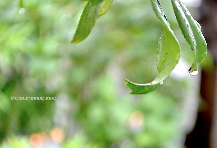 雨上がりの雫1