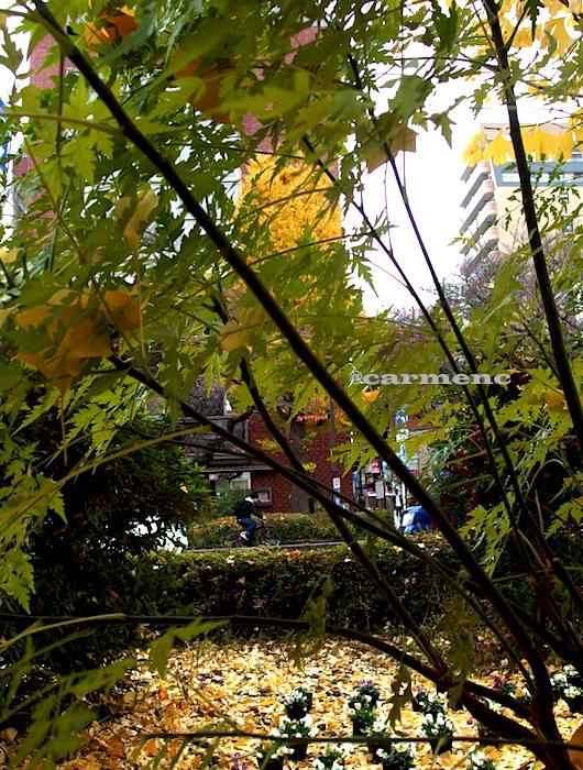 木々の間自転車