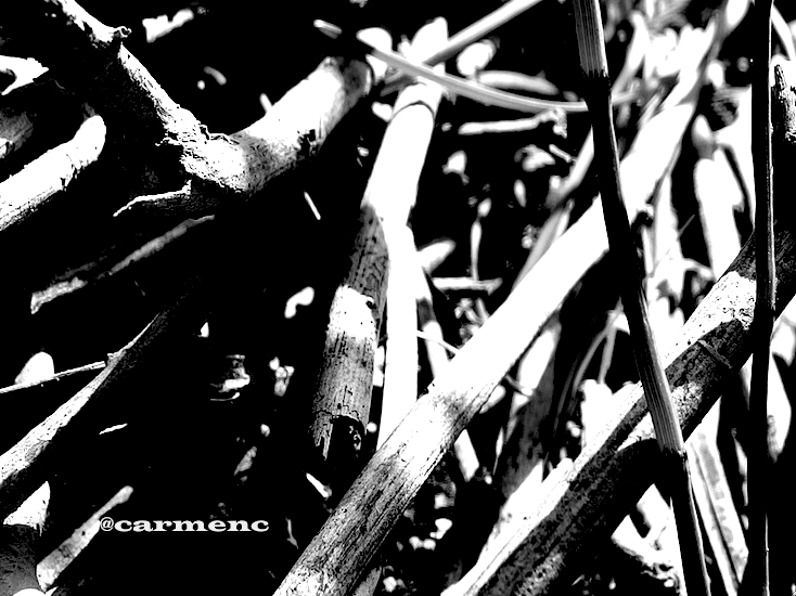 光と影枯れ枝