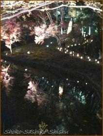 20171207  池  4    肥後灯り