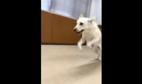 盲導犬04