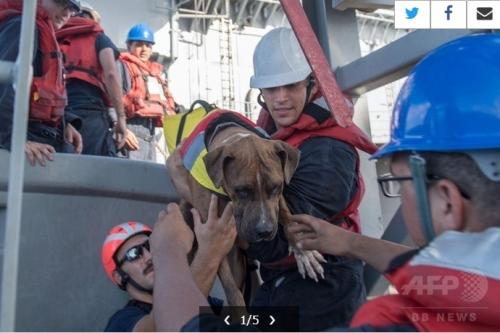 5か月ぶりに犬救助01
