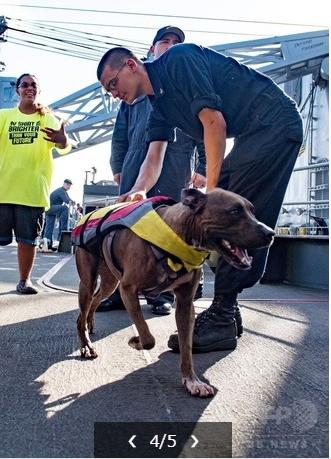 5か月ぶりに犬救助02