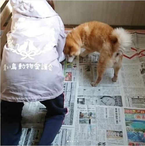 山口市の虐待された柴犬