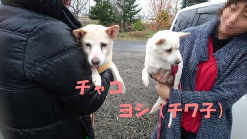 17-11-13_ヨシ&チャコ01s