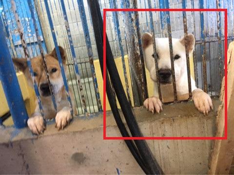 宮崎県収容犬17-11-22-005