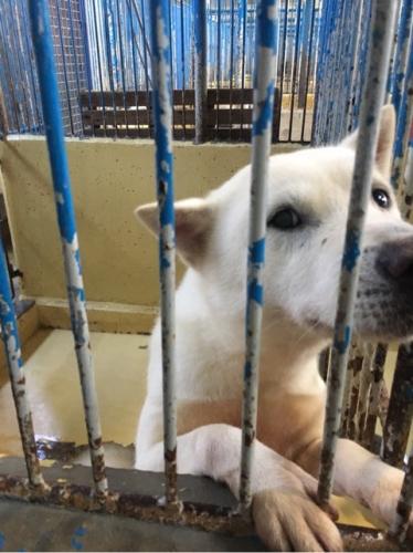宮崎県収容犬17-11-22-007