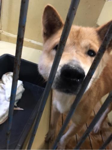 宮崎県収容犬17-11-22-013