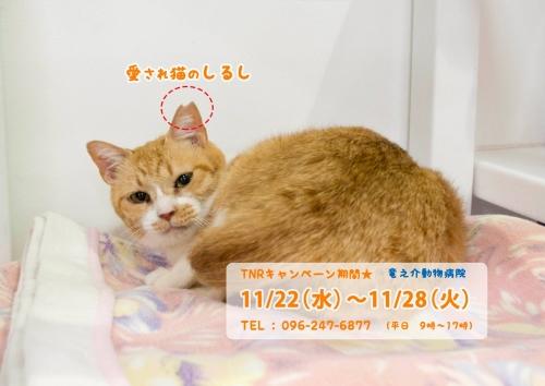 竜之介病院野良猫不妊手術キャンペーン2017-12