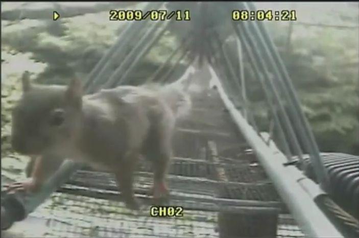 「日本にもあった!野生どうぶつ専用の橋アニマルパスウエイ」 - 「殺処分ゼロの先を目指す全国保健所一覧」