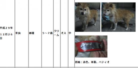 大分市収容犬01