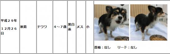 大分市収容犬02