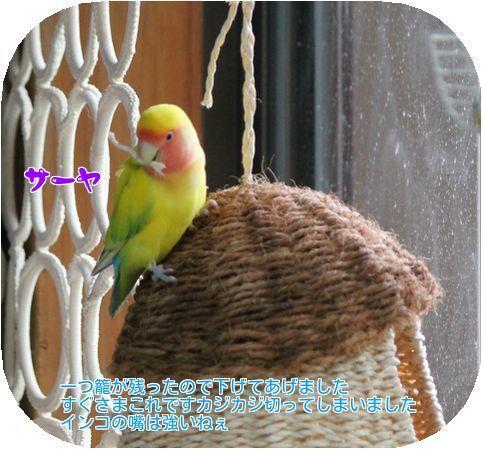 ④籠が・・・