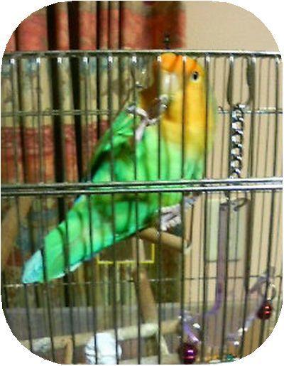 菊池様の愛鳥