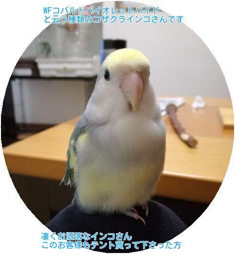 ②片平さんの愛鳥さん