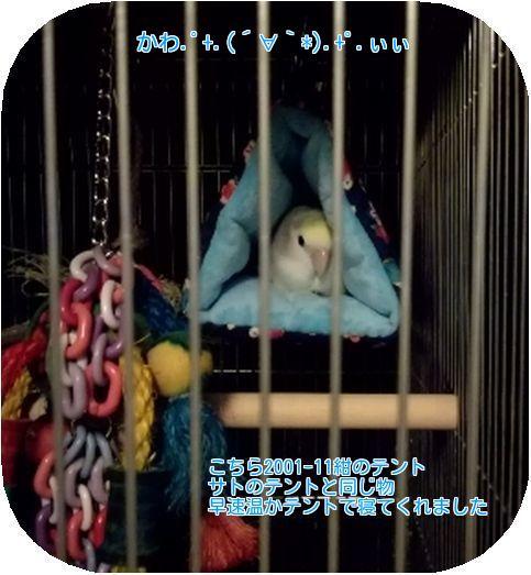 ②片平さんの愛鳥さん2