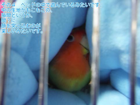 ④つきぃちゃん