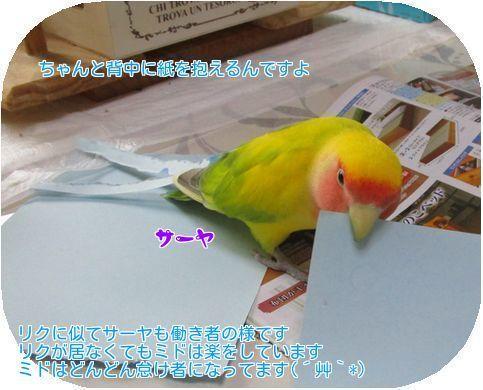 ⑥サーヤの紙切り