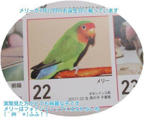 ⑤メリーカレンダー