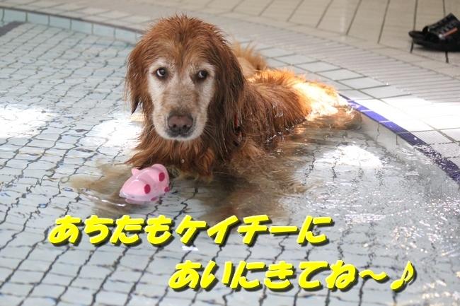 ケイティお水の日貸切プール 020