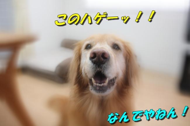 笑顔 013