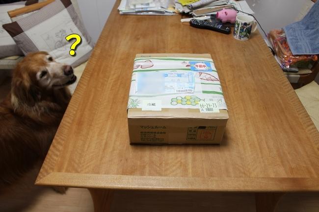 松茸カレンダー 002