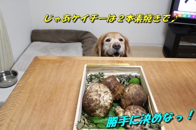 松茸カレンダー 016