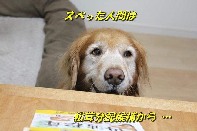 松茸カレンダー 019