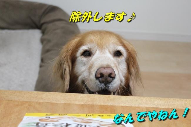松茸カレンダー 020