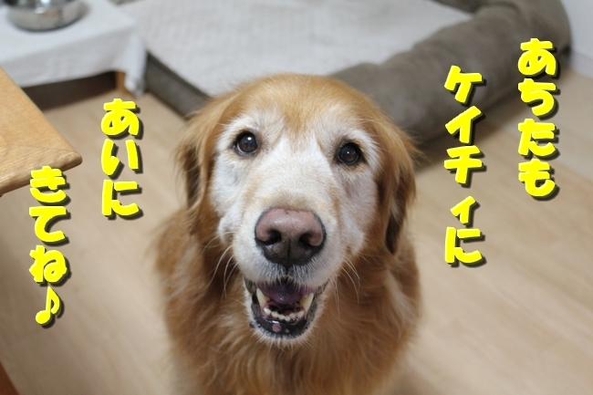 松茸カレンダー 022