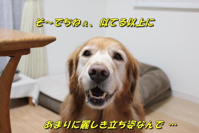 松茸カレンダー 026