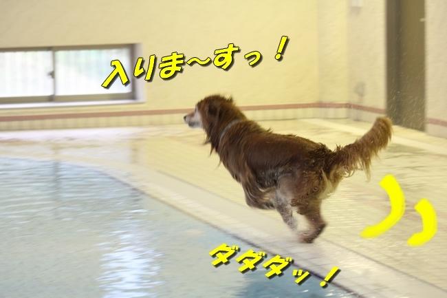 サボちゃん、りんちゃんプール 355