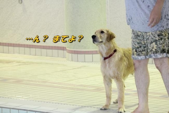 サボちゃん、りんちゃんプール 093