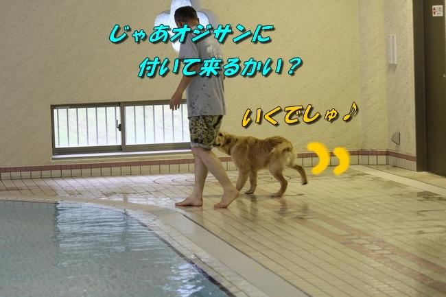 サボちゃん、りんちゃんプール 114