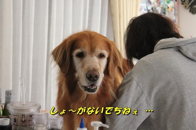 仁ちゃんとプール 025
